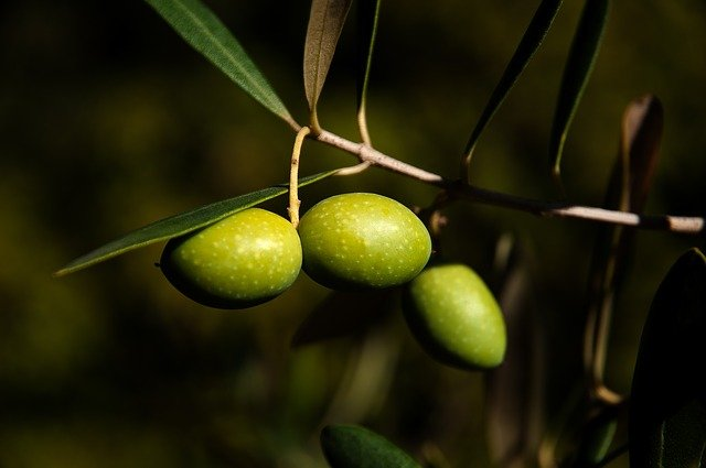 speciale olive