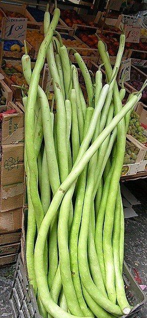 zucchina lunga o zucchina serpente